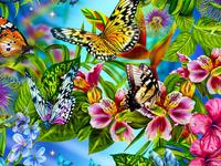 butterflys flowers