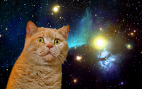 space cat stare