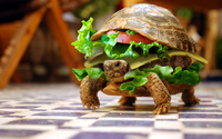 turtle sandwich abstract lettuce tomato cheese