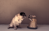 pug doctor who bbc robot